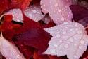 22-Raindrops