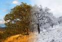 24-Change-Of-Seasons-1