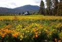 25-Flower-Farm