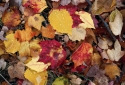 7-Autumn-Leaves